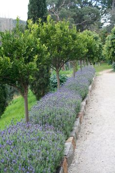 50 Beautiful Long Driveway Landscaping Design Ideas 20 - I like the way this adds length. Flowers are good too. Narrow strip like this next to the school wa - Garden Edging, Garden Paths, Grass Edging, Border Garden, Brick Edging, Garden Hedges, Brick Path, Back Gardens, Outdoor Gardens