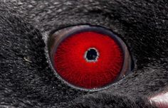 National Geographic Animal eyes   Animal eyes quiz: Can you work out which creatures these are from ...