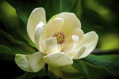 Magnolien lassen sich einfach vermehren