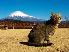 Mt. FUJI   #neko #cat