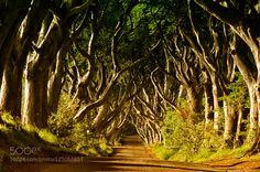 The Dark hedges by elninjo. Please Like http://fb.me/go4photos and Follow @go4fotos Thank You. :-)