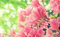 http://wallpapersus.com/wp-content/uploads/2012/11/Beautiful-Spring-Flowers.jpg