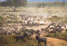tanzania | Tanzania - Tourist Attractions and Travel Guide