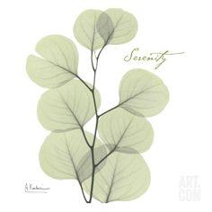 Serenity - Eucalyptus • Albert Koetsier