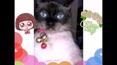 Το Παρεάκι Της Γκαμπριέλας Και Της Αναστασίας !!! - YouTube Cats, Youtube, Animals, Gatos, Animales, Animaux, Animal, Cat, Animais
