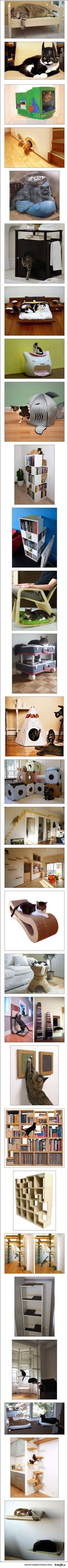 Kitty furniture :)
