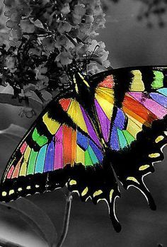 """Someone has spent a good deal of time coloring a swallowtail butterfly with Photoshop. No such thing as """"Rainbow Butterfly"""" Beautiful Creatures, Animals Beautiful, Cute Animals, Butterfly Kisses, Butterfly Flowers, Rainbow Butterfly, Beautiful Bugs, Beautiful Butterflies, Art Papillon"""
