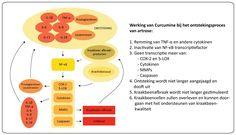 Werking Curcumine bij Ontstekingsproces Artrose