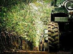 Jeep headlight art - on the trail Old Jeep, Jeep Tj, Jeep Dodge, Jeep Truck, Jeep Brand, Cool Jeeps, Cute Posts, Jeep Life, Outdoor Fun