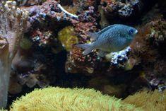 Home - Aquarium Fish Home Aquarium Fish, Tropical Aquarium, Underwater Fish, Beautiful Fish, Pets, Animals, Animaux, Animal, Animales