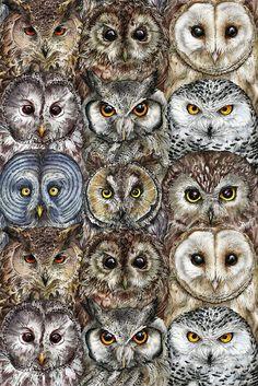 Owl Optics Art Print by farynhughes Owl Bird, Bird Art, Pet Birds, Owl Photos, Owl Pictures, Beautiful Owl, Animals Beautiful, Animals And Pets, Cute Animals