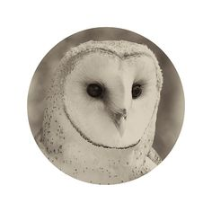 Cute vintage owl photograph print in shades of gray, black and white. Circle cropped.