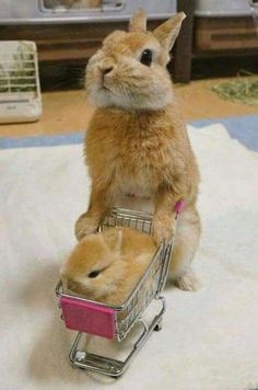♥ Small Pets ♥ Bunny & baby bunny go shopping Don't you just love shopping for small animal products? It's such fun finding just the right habitat, cage or hutch for your pet rabbits, hedgehogs, hamsters or guinea pigs. And who doesn't love to watch… Baby Animals Super Cute, Cute Baby Bunnies, Cute Little Animals, Cute Funny Animals, Cute Babies, Small Animals, Funny Bunnies, Cute Animal Humor, Cutest Bunnies