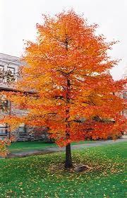 Bradford Pear Tree In A Rainbow Of Colors Trees I Love