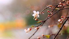 Ukwahlukana Ngokuphelele Nempilo Yakudala Dandelion, Fruit, Flowers, Plants, Dandelions, Plant, Taraxacum Officinale, Royal Icing Flowers, Flower
