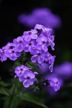 .purple flowers