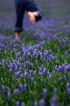 Nadeshiko Purple On Pinterest Lavender Purple And Lilacs