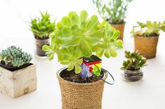 This solar-powered device lets you know when your plants need H2O.