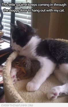 #cat #featured #featured #fun #funny #hilarious