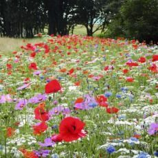 Learn how to create your own mini wild flower meadow without having to have acres of space in your garden.