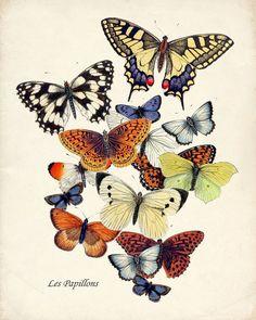 Butterfly Garden Art Print Collage Natural by HighStreetVintage Papillon Butterfly, Vintage Butterfly, Butterfly Art, Butterfly Illustration, Illustration Art, Motifs Animal, Arte Floral, Beautiful Butterflies, Botanical Prints