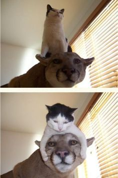 #funny cat and dog;)