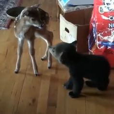 chen u Rehkitz kommen sich näher You are in the right place about Cutest Baby Animals videos Here Cute Little Animals, Cute Funny Animals, Cute Dogs, Cute Animal Videos, Funny Animal Pictures, Logo Pictures, Animal Pics, Tier Fotos, Cute Creatures