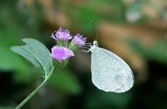 White butterfly with Pink flower