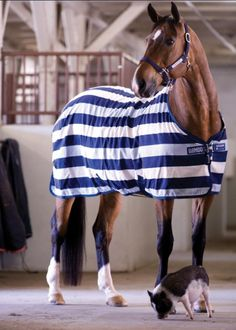 This is Babe & Indy's stable sheet from Rambo. We are all about Horseware products - Rambo, Amigo, Rhino.  Best horse blankets, sheets, etc.  all available at Spectrum.