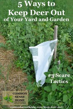 This guide shares 5 tips to keep deer out of your garden, including repellent sprays, solid repellents, scare tactics, and fences and other barriers. Deer Garden, Slugs In Garden, Garden Shrubs, Garden Fencing, Garden Pests, Garden Tools, Garden Insects, Forest Garden, Garden Landscaping