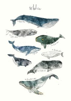 ART PRINTS BY AMY HAMILTON  Whales Arctic & Antarctic Animals Foxes Dinosaurs Sharks