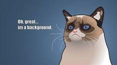 grumpy cat wallpaper - Google meklēšana