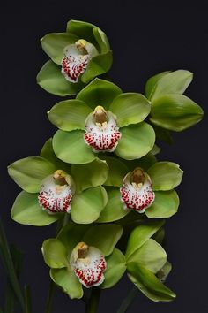 orchids by mail Orchid Plant Care, Orchid Plants, Exotic Plants, Exotic Flowers, Green Flowers, Tropical Flowers, Amazing Flowers, Beautiful Flowers, Yellow Roses