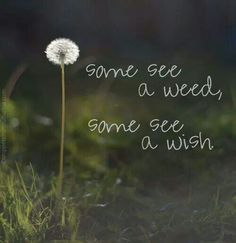 Some see a weed. Some see a wish.  I LOVE this!!! It's all about perspective.  :-)