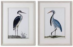Add a dash of wayfaring style to a design with this coastal artwork. Adding a light and airy feel to a space, each bird print is accented by a clean, white mat and is surrounded by distressed, whitewashed wooden frames and matching fillets. Bird Wall Art, Bird Artwork, Glass Wall Art, Stained Glass Art, Wall Art Sets, Wall Art Prints, Framed Prints, Bird Paintings, Bird Pictures