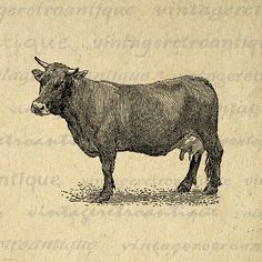 Digital Image Brown Swiss Cow Printable Illustration Download Graphic Vintage Clip Art. High quality printable digital graphic clip art. This high resolution digital artwork is excellent for making prints, iron on transfers, tote bags, papercrafts, and much more. Personal or commercial use. This graphic is large and high quality, size 8½ x 11 inches. Transparent background PNG version included.