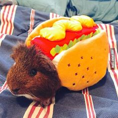 Funny animals in costumes. This is Wooster, in his Halloween costume.