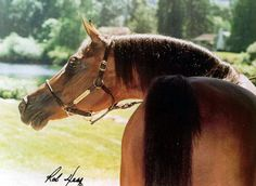 Historichorses