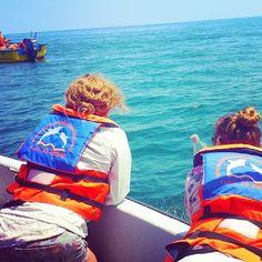 Punta Choros a ver ballenas azules