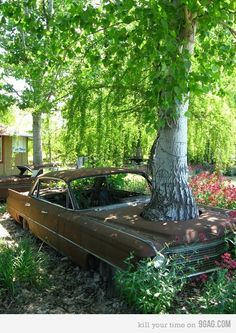 Amazeballs Redneck Landscaping