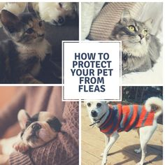 How to Protect Your Pet From Fleas - Fairfield Residential How To Protect Yourself, Fleas, Pet Care, Cute Dogs, Funny Cats, Your Pet, Things To Come, Blog, Funny Kitties