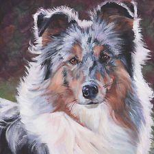 "blue merle Shetland Sheepdog SHELTIE dog art canvas PRINT of painting 8x8"""