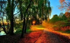 Image result for autumn sunset