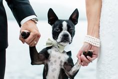 Cute wedding dog in bowtie holding hands with the bride and groom on their wedding