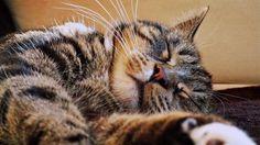 Reposting @ronniactor: My #beautiful #bengalcat Jake, enjoying the #sunshine ! ❤️ #cat #cats #catsofinstagram #ilovemycats #kitten #kittens #cute #happy #instagood #photooftheday #sonya5000 #35mmphotography #followme @cats._lovers @cats_of_instagram