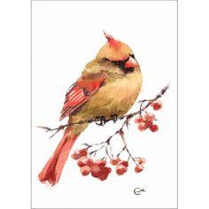 Cardinal rouge aquarelle originale oiseau par CMwatercolors