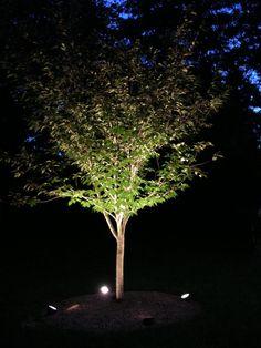 Tree Uplighting Ideas