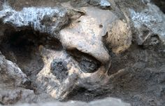 After eight years spent studying a 1.8-million-year-old skull uncovered in the Republic of Georgia, scientists have made a discovery that may rewrite the evolutionary history of our human genus Homo. It would be a simpler story with fewer ancestral species. Early, diverse fossils — those currently recognized as coming from distinct species like Homo habilis, Homo erectus and others — may actually represent variation among members of a single, evolving lineage.