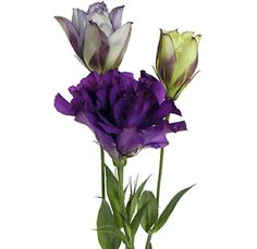Purple lisianthus...love the color.