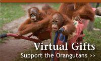 The Orangutan Protection Foundation, Virtual Gifts, Donate, Adopt, spread awareness on Facebook, Twitter, Pinterest etc